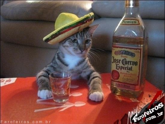 Gato tequila - Blog Farofeiros